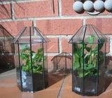 2 x MINIATURE OCTAGONAL GLASS TERRARIUMS. HERBS, PLANTS ETC